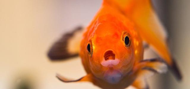 網路行銷不要去問你要釣的魚想吃什麼樣的餌